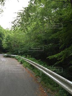 樹々が生い茂る山道の写真・画像素材[1313485]
