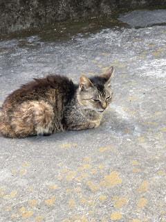 地面に横になっている猫の写真・画像素材[1307684]