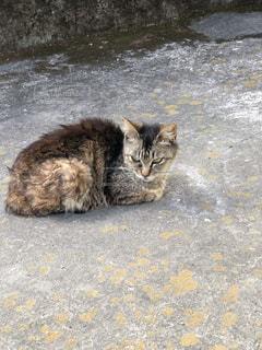 地面に横になっている猫の写真・画像素材[1307685]
