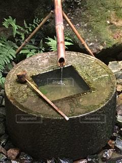 涼しげな日本庭園の一角の写真・画像素材[1308693]