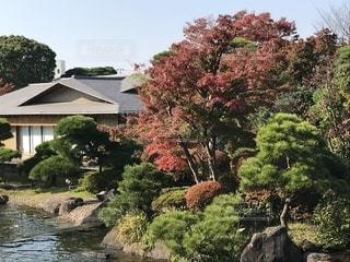 庭園の写真・画像素材[1309887]