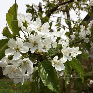 近くの花のアップの写真・画像素材[1310394]