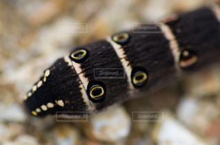いも虫さんの写真・画像素材[1437974]