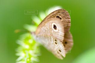蛾の写真・画像素材[1438158]
