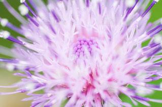 花の写真・画像素材[1438233]