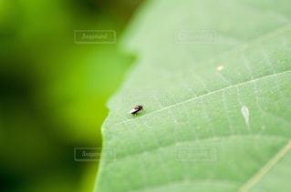 近くに緑の葉のアップの写真・画像素材[1438287]