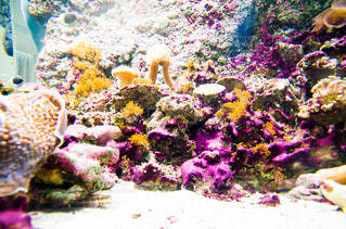 熱帯魚の写真・画像素材[1440502]