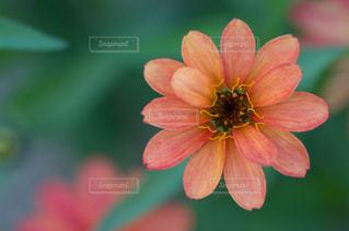 花の写真・画像素材[1699160]