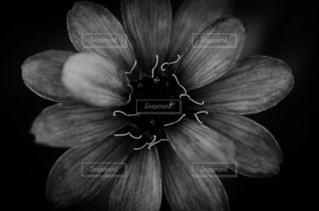 花の写真・画像素材[1699161]