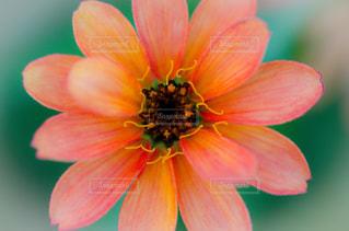 花の写真・画像素材[1699166]