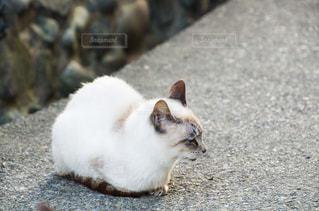 猫の写真・画像素材[2225341]