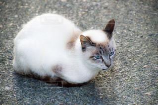 猫の写真・画像素材[2225342]