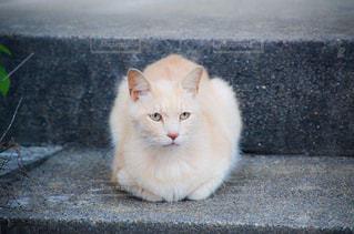 猫の写真・画像素材[2225344]