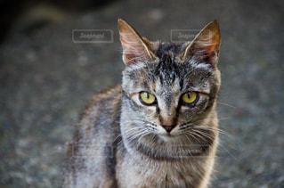 猫の写真・画像素材[2225348]