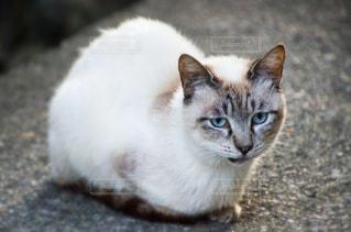 猫の写真・画像素材[2225352]