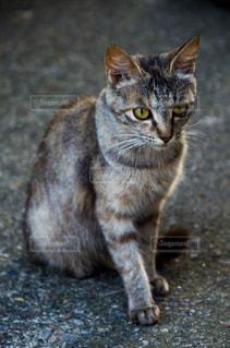 猫の写真・画像素材[2225353]