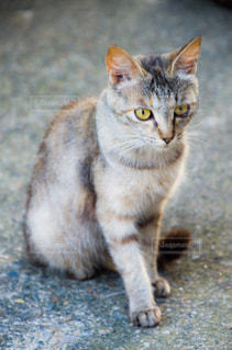 猫の写真・画像素材[2225355]