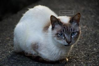 猫の写真・画像素材[2225356]