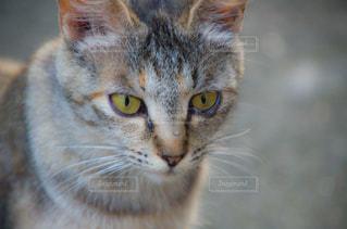 猫の写真・画像素材[2225357]