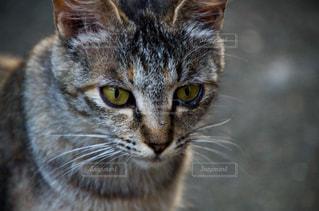 猫の写真・画像素材[2225359]