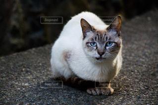 猫の写真・画像素材[2225367]