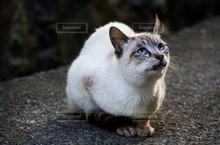 猫の写真・画像素材[2225369]