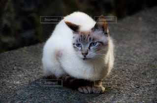 猫の写真・画像素材[2225372]