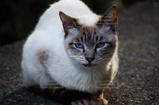 猫の写真・画像素材[2225374]