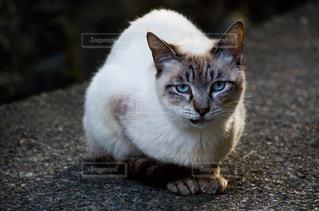 猫の写真・画像素材[2225377]
