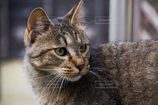 猫の写真・画像素材[2225382]