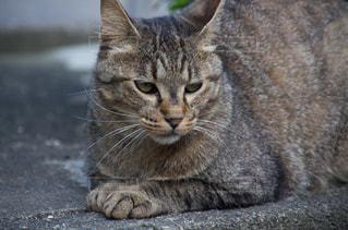 猫の写真・画像素材[2225388]