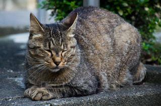 猫の写真・画像素材[2225389]