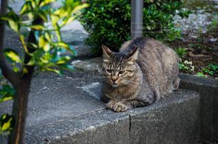 猫の写真・画像素材[2225391]