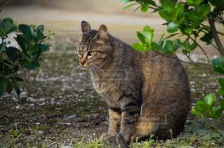 庭に座っている猫の写真・画像素材[2225406]