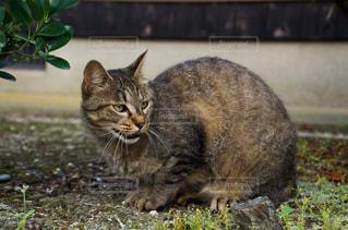 猫の写真・画像素材[2225408]