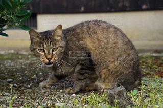 猫の写真・画像素材[2225414]