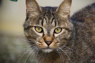 猫の写真・画像素材[2225420]