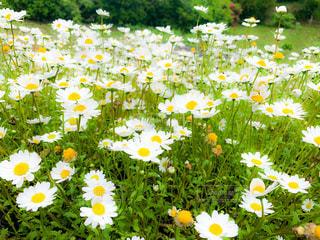 花の写真・画像素材[2242454]