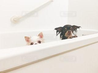 愛犬ちゃんとお風呂🛀の写真・画像素材[2515015]