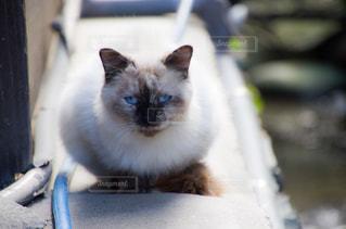 猫ちゃんの写真・画像素材[2737970]