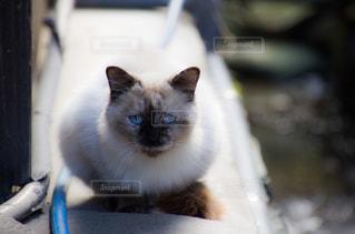 猫ちゃんの写真・画像素材[2737971]