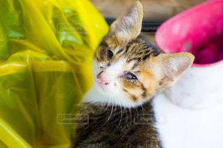 子猫ちゃんの写真・画像素材[2737975]