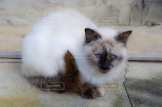 猫ちゃんの写真・画像素材[2737981]