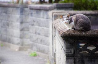 猫ちゃんの写真・画像素材[2737988]