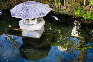 池の鯉の写真・画像素材[3888072]