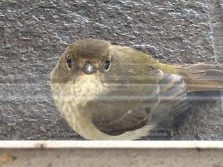 鳥 - No.40542