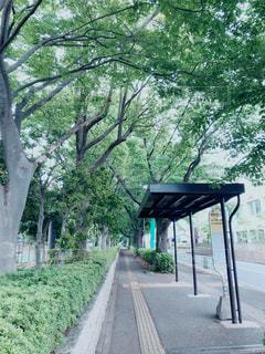 公園そばのバス停の写真・画像素材[1315852]