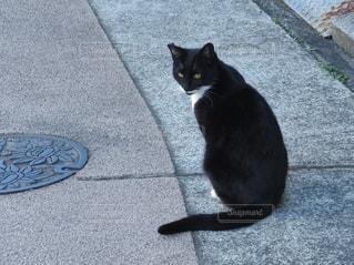 振り向く黒猫の写真・画像素材[1328407]