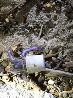 ペットボトルキャップのヤドカリの写真・画像素材[1311860]