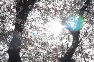 近くの木のアップの写真・画像素材[1313513]